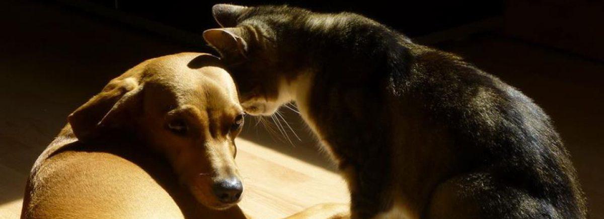 cropped-Pet-Liner-1.jpg